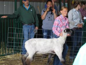 KC Fair Sheep, pigs goats 2019